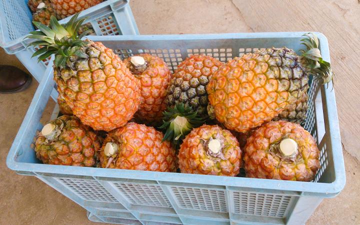 熱帯アジア農業の可能性